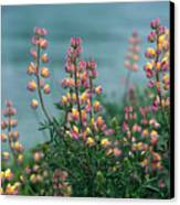 Harlequins In Harmony Canvas Print by Kathy Yates