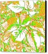 Harmony 11 Canvas Print
