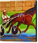Harness Racing At Bluebonnets Canvas Print