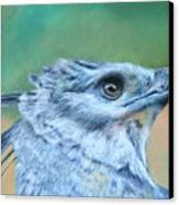 Harpy Eagle Two Canvas Print
