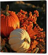 Harvest Colors Canvas Print by Sandra Cunningham