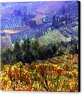 Harvest Time At The Vineyard Canvas Print