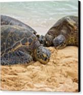 Hawaiian Green Sea Turtles 1 - Oahu Hawaii Canvas Print