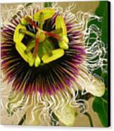 Hawaiian Lilikoi Canvas Print by James Temple
