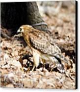 Hawk And Gecko Canvas Print by George Randy Bass