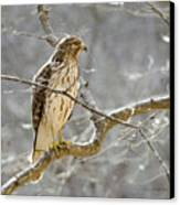 Hawk On Lookout Canvas Print by George Randy Bass