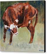 Head-scratching Heifer Pad Canvas Print