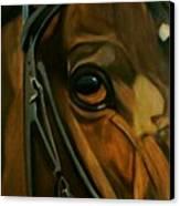 Head Stall Canvas Print