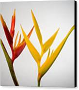 Heliconia Canvas Print by Tomas del Amo - Printscapes