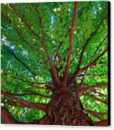 Her Leafy Arms Canvas Print by Guy Ricketts