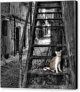 Here Kitty Kitty Kitty... Canvas Print by Evelina Kremsdorf