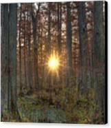 Heron Pond Sunrise Canvas Print by Steve Gadomski
