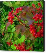 Hi Bush Cranberry Close Up Canvas Print