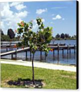 Hibiscus Rosasinensis With Fruit On The Indian River In Florida Canvas Print