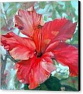 Hibiscus Rouge Canvas Print