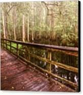 Highlands Hammock Canvas Print