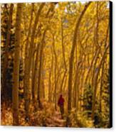 Hiking In Fall Aspens Canvas Print