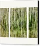 Hillside Forest Canvas Print by Priska Wettstein