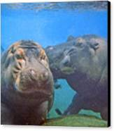 Hippos In Love Canvas Print