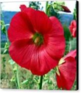 Hollyhock Hill Canvas Print