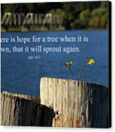 Hope For A Tree Canvas Print by James Eddy