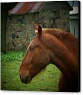Horse And Shed Canvas Print