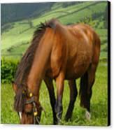 Horse Grazing Canvas Print