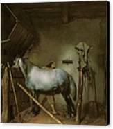 Horse In A Stable Canvas Print by Gerard Terborch