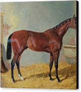 Horse In A Stable Canvas Print by John Frederick Herring Snr