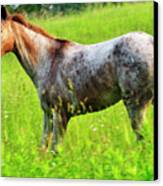 Horse In Pasture Field Canvas Print by Thomas R Fletcher