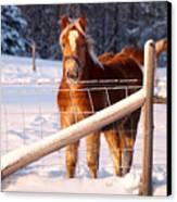 Horse In The Snow Canvas Print by Martin Rochefort