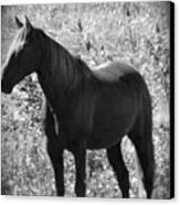 Horse Scope Canvas Print by Debra     Vatalaro