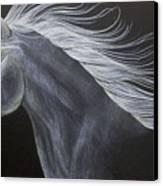 Horse Canvas Print by Susan Clausen