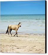 Horse Walking On Beach Canvas Print by Vitor Groba