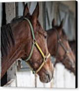Horses For Sale Canvas Print by Brian Mollenkopf