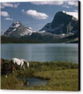 Horses Graze In A Lakeside Meadow Canvas Print
