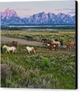 Horses Walk Canvas Print by Jeff R Clow