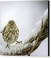 House Finch Snow Is Coming Canvas Print by LeeAnn McLaneGoetz McLaneGoetzStudioLLCcom