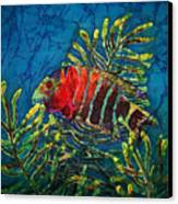 Hovering - Red Banded Wrasse Canvas Print