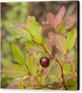 Huckleberry Canvas Print by Idaho Scenic Images Linda Lantzy
