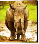 Huge South African Rhino Canvas Print by Anna Om