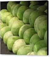 Huge Watermelons Canvas Print by Yali Shi