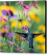 Hummingbird Dance Canvas Print by Dana Moyer