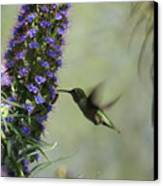 Hummingbird Sharing Canvas Print by Ernie Echols