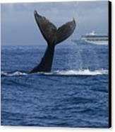 Humpback Whale Tail Lobbing Near Cruise Canvas Print by Flip Nicklin