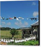 Hung Out To Dry Canvas Print by Renee Holder
