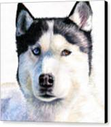 Husky Blue Canvas Print