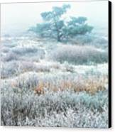 Ice Tree Shenandoah National Park Canvas Print by Thomas R Fletcher