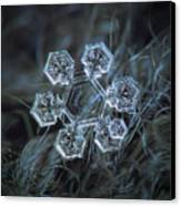 Icy Jewel Canvas Print