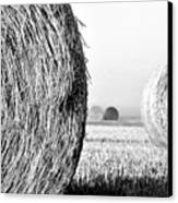 In The Hay -black And White Canvas Print